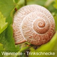 Saale Unstrut Wein - Probierpaket Saale Weinmeile at Home